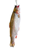 Trout in hook Stock Photo