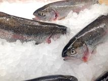 Trout on the ice. View at the fresh rainbow trout whole on the ice in the store display case royalty free stock images