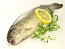 Trout, isolated Stock Photo