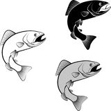 Trout. Isolated trout - clip art illustration and  silhouette Royalty Free Stock Image