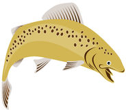 Trout jumping Royalty Free Stock Photos