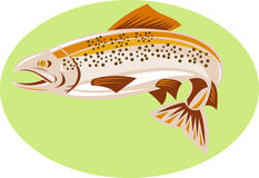 Trout jumping Stock Images