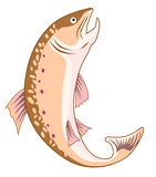 Trout leaping out of water. Vector art of a trout leaping out of water Stock Images