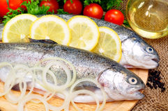 Trout stock image