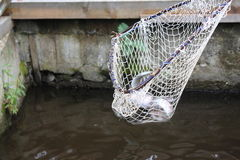 Trout nets. Nets trout catch in the basin Stock Photo
