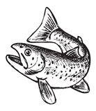 Trout pattern. The figure shows a trout Royalty Free Stock Photography