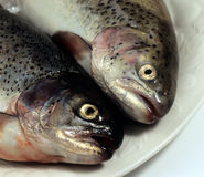 Trout on a plate. stock photography