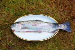Trout rainbow ready to grill, on the grass. Trout rainbow ready to grill, on the grass Stock Photography