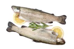 Trout raw fish with lemon and rosemary isolated on white background stock images
