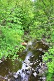 Trout River Stream, Franklin County, Malone, New York, United States. Green vegetation covered Trout River Stream, located in Franklin County, Malone, New York stock image