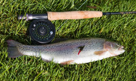Trout and rod Royalty Free Stock Images