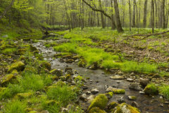 Trout Run Creek Royalty Free Stock Photos