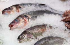 Trout, seabass and other seafood on market stall Stock Photo