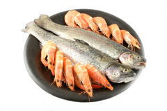 Trout and Shrimp Royalty Free Stock Image
