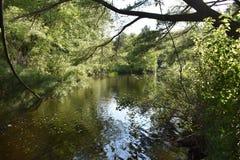 Trout Stream in the Poconos. Trout Stream in the Pocono Mountains, Pennsylvania royalty free stock photo