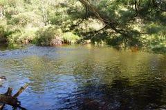 Trout Stream in the Poconos. Trout Stream in the Pocono Mountains, Pennsylvania stock photography