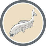 Trout Swimming Cartoon Circle Royalty Free Stock Images