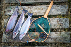 Trout trophy composition Royalty Free Stock Photography