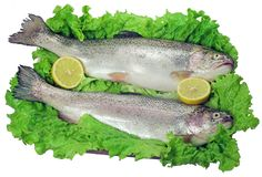 Trouts. Fresh trouts with lettuce and lemon royalty free stock photography