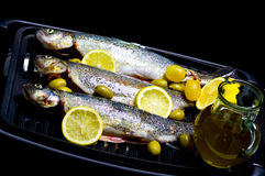 Trouts Royalty Free Stock Photos