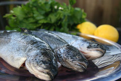Trouts. Trout ready to be prepared on plate royalty free stock photos