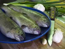 The trouts on the blue plate. Three fresh trouts at blue plate, garlic and kitchen knife Royalty Free Stock Photos