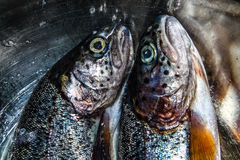 Trouts - fish. Excellent food for the baked trout Stock Image
