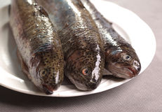 Trouts fishes on plate. Three trouts fish on white plate Stock Photo
