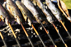 Trouts on grill Stock Images