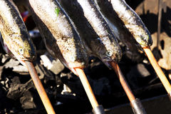 Trouts on grill Stock Photography