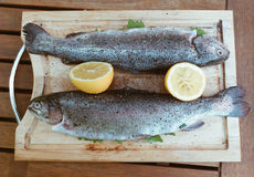 Trouts Royalty Free Stock Photo