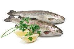 Trouts with lemon and parsley Stock Photography