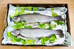 Trouts with melissa. Two trouts prepared for baking with melissa Royalty Free Stock Photography