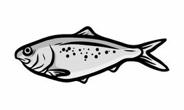Fish sea design logo icon. Trouts and other fishes are a recurring topic in several biology projects or fishing publications, this vector set can be useful for Royalty Free Stock Photo