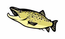 Fish sea design logo icon unique. Trouts and other fishes are a recurring topic in several biology projects or fishing publications, this vector set can be Stock Image
