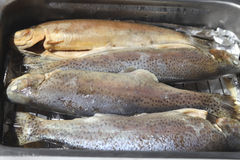 Trouts in pan Royalty Free Stock Photography