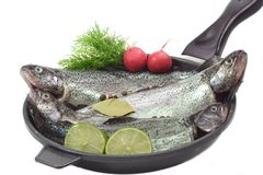 Trouts in a pan. Close-up of raw rainbow trouts in a pan ready to cook stock photography