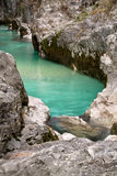 Trouts in pure river soca in canyon gorge, julian alps, slovenia Royalty Free Stock Photography