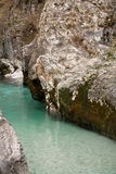 Trouts in pure river soca in canyon gorge, julian alps, slovenia Royalty Free Stock Photos