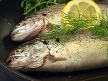 Trouts ready for frying, closeup Stock Photography