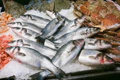 Trouts for sale at Rialto market in Venice Royalty Free Stock Images