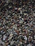 Trouvez la grenouille photo stock