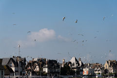 Trouville-sur-Mer, Normandy, France Stock Image