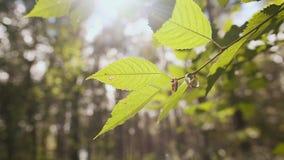 Trouwringen die op een boomtak hangen in bos stock video
