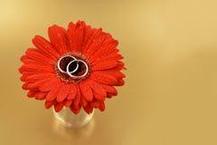 Trouwringen met de beelden van een bloemvoorraad Royalty-vrije Stock Foto