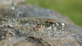Trouwringen met waterdruppeltjes, stock videobeelden