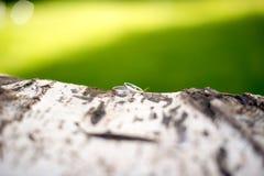 Trouwringen op de schors van de boomstamboom stock fotografie