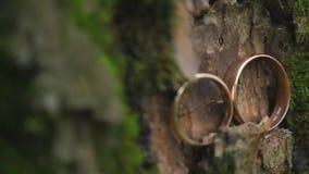 Trouwringen op een boomschors Juwelen bij het huwelijk stock videobeelden