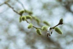Trouwringen op een wilgentakje De dag van de lente Het begin van de lente royalty-vrije stock afbeelding
