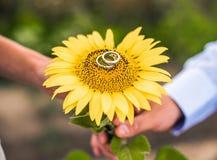 Trouwringen op een zonnebloem royalty-vrije stock foto